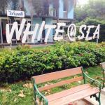 White @ Sea Foto