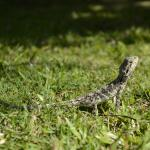 A lizard that came out to enjoy the sun while we stayed at Woolshed