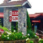 Restaurante Freddo Fresas