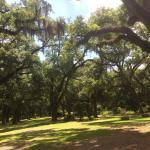 Foto de Butler Greenwood Plantation