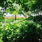Moriyama Ashikarien Garden