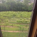 Foto de Hermann Hill Vineyard Inn & Spa and River Bluff Cottages