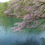 桜の花も見られました