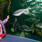 Macduff Marine Aquarium