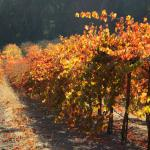 Vineyard Views from Property - On site winemaking