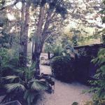 jardin arboisé