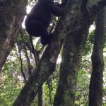 In bwindi impenetrable national park