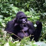 Virunga Gorilla Experts Ltd