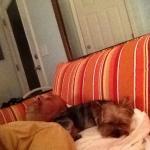 My pet enjoying her stay