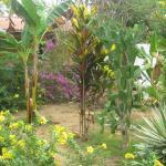 Un agréable jardin qui donne envie de s'y rendre.