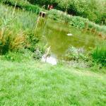 Foto de Ashlea Pools Country Park