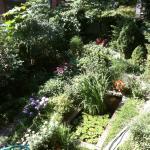 Vista del jardín desde la terraza en la cocina