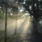Sun coming through the morning fog.