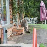 Foto de Grampians Motel Halls Gap