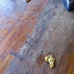 Food on floor at breakfast - not cleaned from night before