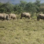Cruzeiro Safaris Day trip view of white rhinos at Lake Nakuru National Park