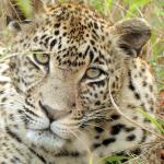 Photo de Arathusa Safari Lodge