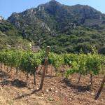 The chateau, ancient ruins  and vineyard