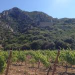 A view of the vineyard, the view and ancient ruins