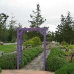 Pretty gardens - Sunshine Lavender Farm