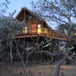 Foto de Bona Ntaba Self Catering Tree House Lodge