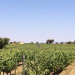 Prachtig uitzicht op de stad Évora. Lekker verfrissend zwembad en nog een foto van de wijngaard.