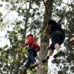 Walking in the tree tops
