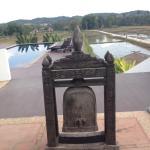 Piscina y campo de arroz