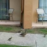 friends on patio