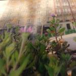 Flores na janela do meu quarto