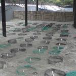 アオウミガメの人口孵化場