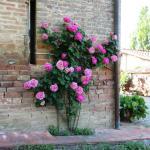 Una rosa è una rosa è una rosa (Gertrude Stein)