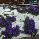 Cottage fleuri