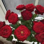 Roses at Window of Surrone Guest House