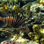 Coral Reefs Foto