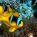 Foto di Coral Reefs