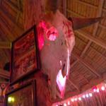 Cows head at the bar