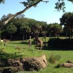 Animal Kingdom Zoo