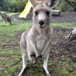A friendly kangaroo & her joey outside our D'Alton's Cabin.