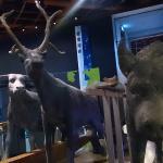 澎湖海溝發現的動物化石 - Ice age Animels in Taiwan