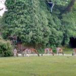 Beautiful Ocknell and Longbeech Campsite