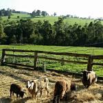 Our 1st taste of farm life... :)