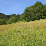 Fields above Chalet Papillon