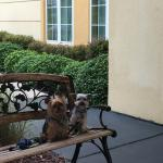 Charlie and Ranger approve a stay at this La Quinta Inn