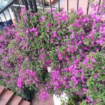 fiori lungo le scale