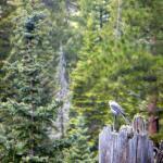 West Baldy Trail