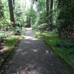 Shaded Gardens