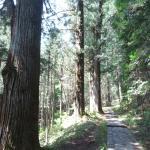 二荒山神社本社から行者堂に行く途中の風景。 巨木群が素晴らしいです。 上りなのでチョットキツイかも?