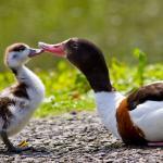 WWT Llanelli Wetland Centre