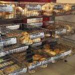 Great selection of daily fresh bagels